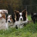 Fluke, Hazel, Viva und Benji