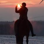 Dickes Pony - Sonnenuntergang_01