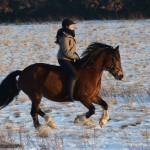 Dickes Pony - Sonnenuntergang_02