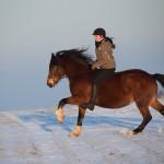 Dickes Pony - Sonnenuntergang_03