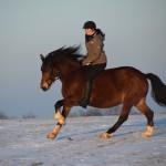 Dickes Pony - Sonnenuntergang_04