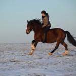 Dickes Pony - Sonnenuntergang_05