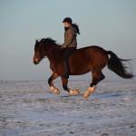Dickes Pony - Sonnenuntergang_06