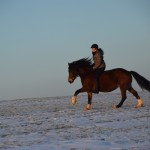 Dickes Pony - Sonnenuntergang_07