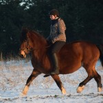 Dickes Pony - Sonnenuntergang_09