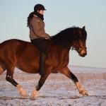 Dickes Pony - Sonnenuntergang_10