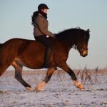 Dickes Pony - Sonnenuntergang_11