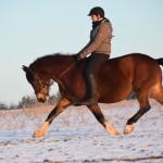 Dickes Pony - Sonnenuntergang_12