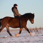 Dickes Pony - Sonnenuntergang_13