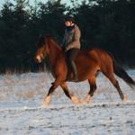 Dickes Pony - Sonnenuntergang_14