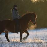 Dickes Pony - Sonnenuntergang_15