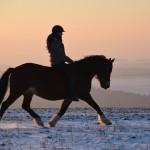 Dickes Pony im Sonnenuntergang