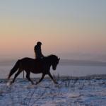 Dickes Pony - Sonnenuntergang_17