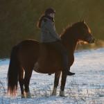 Dickes Pony - Sonnenuntergang_18