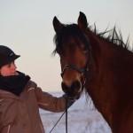 Dickes Pony - Sonnenuntergang_21