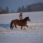 Dickes Pony - Sonnenuntergang_22