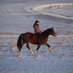 Dickes Pony - Sonnenuntergang_23