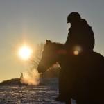 Dickes Pony - Sonnenuntergang_24