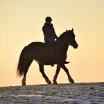 Dickes Pony - Sonnenuntergang_25