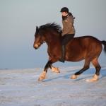 Dickes Pony - Sonnenuntergang_26