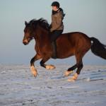 Dickes Pony - Sonnenuntergang_27