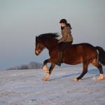 Dickes Pony - Sonnenuntergang_28