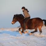 Dickes Pony - Sonnenuntergang_29