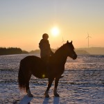 Dickes Pony - Sonnenuntergang_30