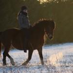 Dickes Pony - Sonnenuntergang_31