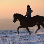 Dickes Pony - Sonnenuntergang_32