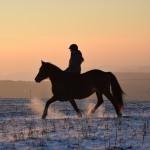 Dickes Pony - Sonnenuntergang_33