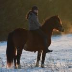 Dickes Pony - Sonnenuntergang_34