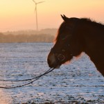 Dickes Pony - Sonnenuntergang_35