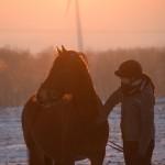 Dickes Pony - Sonnenuntergang_39
