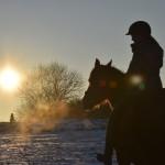 Dickes Pony - Sonnenuntergang_41