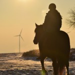 Dickes Pony - Sonnenuntergang_42