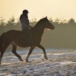Dickes Pony - Sonnenuntergang_43