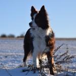 Schnee_Januar_01