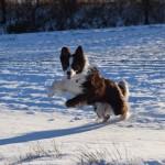 Schnee_Januar_05