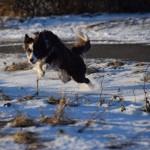 Schnee_Januar_10