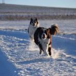 Schnee_Januar_11