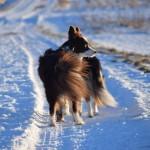 Schnee_Januar_13