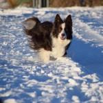 Schnee_Januar_14