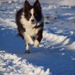 Schnee_Januar_15
