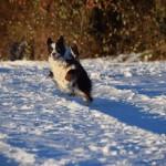 Schnee_Januar_16