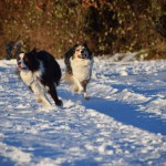 Schnee_Januar_17