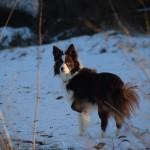Schnee_Januar_21