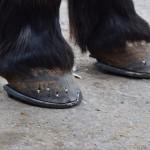 Die neuen Schuhe sind fertig